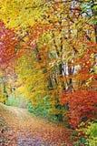 ζωηρόχρωμο δάσος φθινοπώρ& Στοκ εικόνες με δικαίωμα ελεύθερης χρήσης