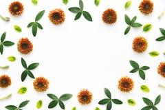 ζωηρόχρωμο floral πλαίσιο Στοκ Φωτογραφίες