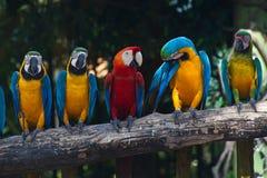 ζωηρόχρωμο macaw Στοκ Φωτογραφίες
