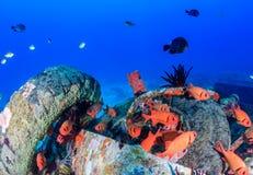 Ζωηρόχρωμο soldierfish γύρω από τα υποβρύχια συντρίμμια Στοκ Φωτογραφίες
