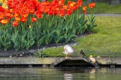 ζωηρόχρωμο spri κήπων λουλουδιών στοκ εικόνες