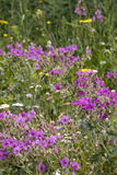 Ζωηρόχρωμο Wildflowers Στοκ Φωτογραφίες