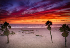 Ζωηρό ηλιοβασίλεμα στη νότια παραλία Καλιφόρνιας με τους φοίνικες Στοκ Εικόνες