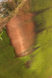 Ζωηρό χρώμα του βράχου Στοκ φωτογραφία με δικαίωμα ελεύθερης χρήσης