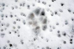 Ζωικά ίχνη στο χιόνι, στοκ φωτογραφίες