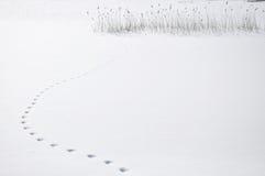 ζωικά βήματα Στοκ εικόνα με δικαίωμα ελεύθερης χρήσης