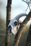 ζωικά δέντρα κρανίων Στοκ εικόνα με δικαίωμα ελεύθερης χρήσης