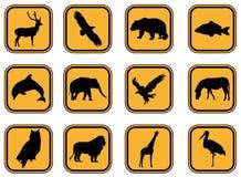 ζωικά εικονίδια Στοκ Εικόνες