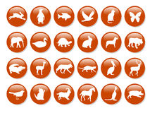 ζωικά εικονίδια Στοκ εικόνες με δικαίωμα ελεύθερης χρήσης