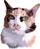 Ζωικά κατοικίδια ζώα γατών Στοκ Φωτογραφία