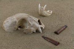 Ζωικά κόκκαλα κρανίων bobcat και περιβλήματα σφαιρών στην άμμο ερήμων Στοκ Φωτογραφία