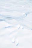 Ζωικές διαδρομές στο χιόνι Στοκ εικόνες με δικαίωμα ελεύθερης χρήσης