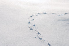 ζωικές διαδρομές χιονιο Στοκ Εικόνες