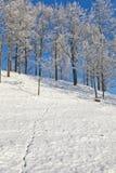 ζωικές διαδρομές χιονιο Στοκ φωτογραφίες με δικαίωμα ελεύθερης χρήσης