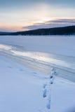 Ζωικές διαδρομές στο χειμερινό χιόνι Στοκ εικόνα με δικαίωμα ελεύθερης χρήσης