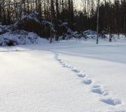 Ζωικές διαδρομές Στοκ φωτογραφίες με δικαίωμα ελεύθερης χρήσης