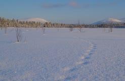 ζωικές διαδρομές χιονιο Στοκ εικόνα με δικαίωμα ελεύθερης χρήσης