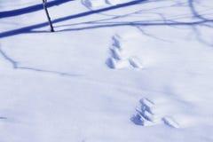 ζωικές διαδρομές χιονιο Στοκ Εικόνα