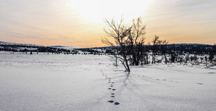 Ζωικές διαδρομές Στοκ εικόνες με δικαίωμα ελεύθερης χρήσης