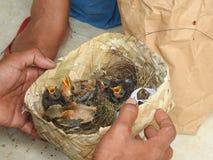 Ζωική αγορά στο Μπαλί Ινδονησία στοκ εικόνα με δικαίωμα ελεύθερης χρήσης