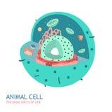Ζωική ανατομία κυττάρων Στοκ Φωτογραφία