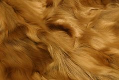ζωική γούνα ΙΙ Στοκ Φωτογραφίες