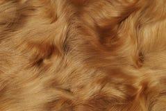 ζωική γούνα Στοκ Εικόνες