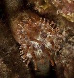 ζωική θάλασσα anemone υποβρύχι&alp Στοκ φωτογραφία με δικαίωμα ελεύθερης χρήσης