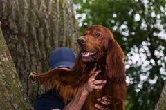 Ζωική ομάδα rescua Σκυλί διάσωσης Η εργασία ενός κτηνιάτρου Ζωική διάσωση στοκ εικόνες με δικαίωμα ελεύθερης χρήσης