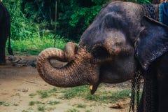 Ζωική περίληψη ζουγκλών ελεφάντων υποβάθρου Στοκ Εικόνες