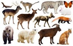 Ζωική συλλογή Ασία Στοκ Εικόνα
