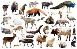 Ζωική συλλογή Ασία Στοκ εικόνα με δικαίωμα ελεύθερης χρήσης
