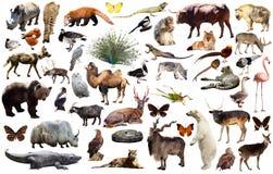 Ζωική συλλογή Ασία Στοκ Εικόνες