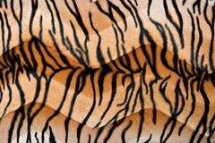 ζωική τυπωμένη ύλη ανασκόπη&sigm Στοκ Εικόνες