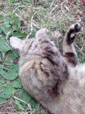 Ζωική χλόη φύσης κατοικίδιων ζώων γατών Στοκ εικόνα με δικαίωμα ελεύθερης χρήσης