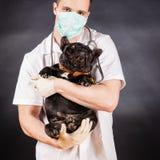 Ζωικός γιατρός Στοκ φωτογραφίες με δικαίωμα ελεύθερης χρήσης