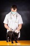 Ζωικός γιατρός Στοκ Εικόνες