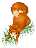 ζωικός σκίουρος Στοκ Φωτογραφίες