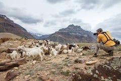 Ζωικός φωτογράφος φύσης στοκ εικόνες