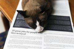 Ζωικός χαριτωμένος λατρευτός της Pet γατακιών γατών Στοκ Φωτογραφία