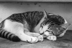 Ζωικός χαριτωμένος γραπτός κινηματογραφήσεων σε πρώτο πλάνο γατών νέος στοκ φωτογραφίες με δικαίωμα ελεύθερης χρήσης
