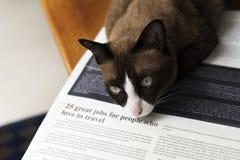 Ζωικός χαριτωμένος λατρευτός της Pet γατακιών γατών Στοκ Εικόνα