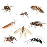 ζωικό έντομο προγραμματι&sigma Στοκ Εικόνες