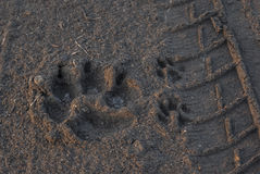 Ζωικό ίχνος στην άμμο στοκ εικόνες
