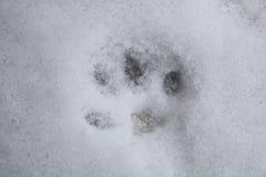 Ζωικό ίχνος στο χιόνι στοκ εικόνες
