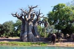 Ζωικό βασίλειο της Disney ` s Στοκ εικόνα με δικαίωμα ελεύθερης χρήσης
