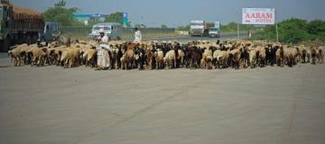Ζωικό κεφάλαιο στο δρόμο στο Gujarat Στοκ Φωτογραφία