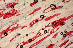 ζωικό κύτταρο Στοκ φωτογραφία με δικαίωμα ελεύθερης χρήσης
