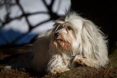 Ζωικό πορτρέτο στο δάσος Στοκ φωτογραφία με δικαίωμα ελεύθερης χρήσης