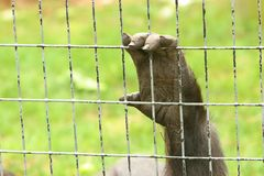 ζωικό χέρι κλουβιών Στοκ εικόνες με δικαίωμα ελεύθερης χρήσης